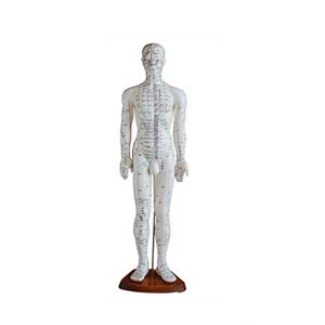 Acupuncture Model - Male Full Body - 50 cm