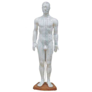 Acupuncture Model - Male Full Body - 60 cm