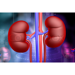 Various Diseas of Kidney -